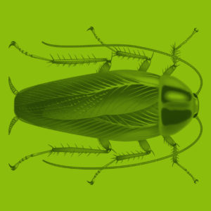 Käfer wissenschaftliche Illustration